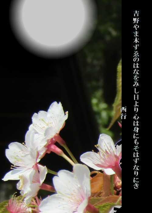 f0117041_05395427.jpg