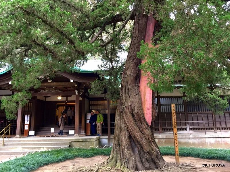 ☂ 雨の鎌倉散策 ☂ 円覚寺 其の弐_a0092659_01430372.jpg