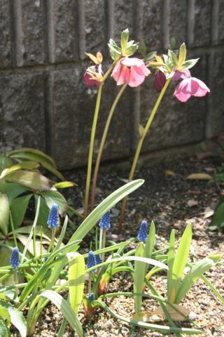 庭が華やかに♬_c0248269_11581680.jpg