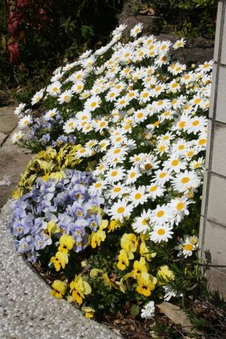 庭が華やかに♬_c0248269_11584049.jpg