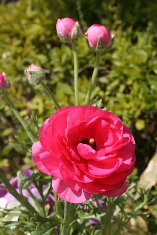 庭が華やかに♬_c0248269_12015282.jpg