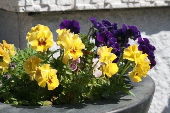 庭が華やかに♬_c0248269_12031346.jpg