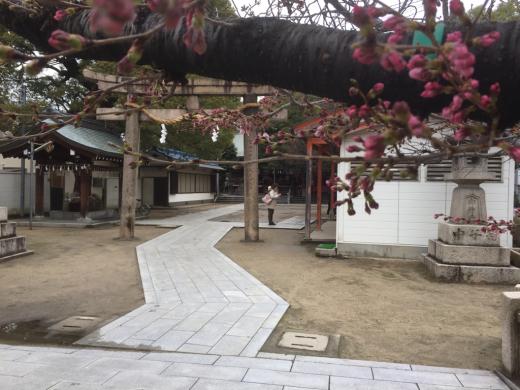 大宮神社さんに一日詣りしてきました。_f0052181_14464068.jpg