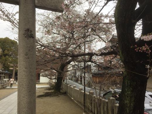 大宮神社さんに一日詣りしてきました。_f0052181_14464163.jpg