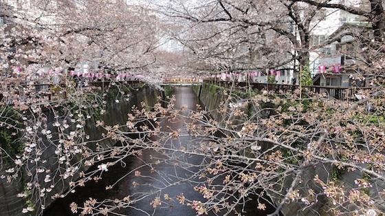 今日の目黒川(4/2日)_f0230689_10133377.jpg