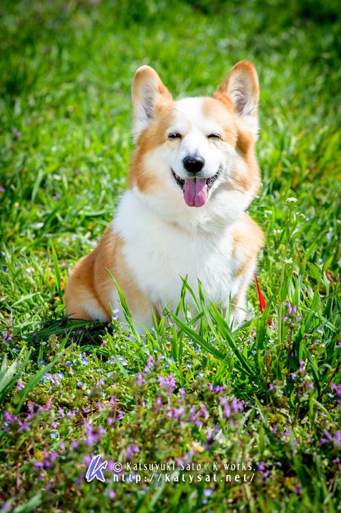 春のウェンディちゃん_d0102523_19235245.jpg