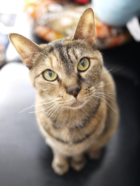猫のお留守番 KEEちゃん編。_a0143140_20521994.jpg