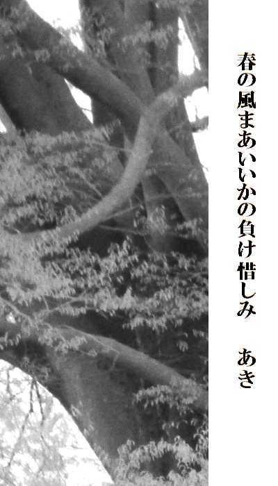 f0117041_07073893.jpg