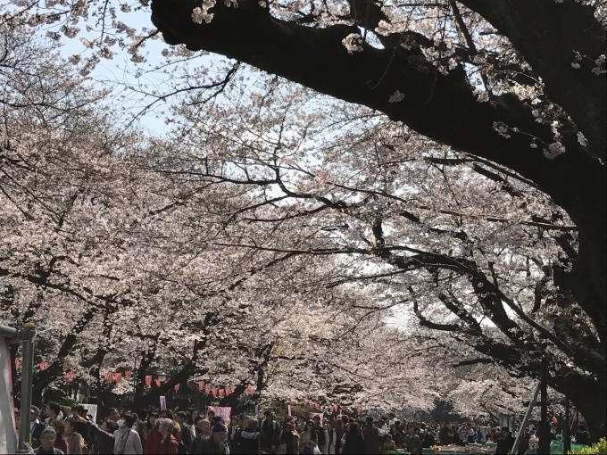 桜満開ですね❁_f0140343_15244316.jpg