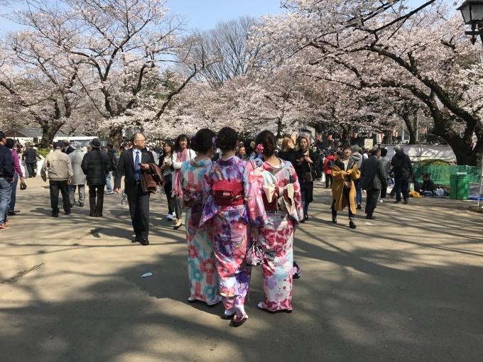 桜満開ですね❁_f0140343_15251060.jpg