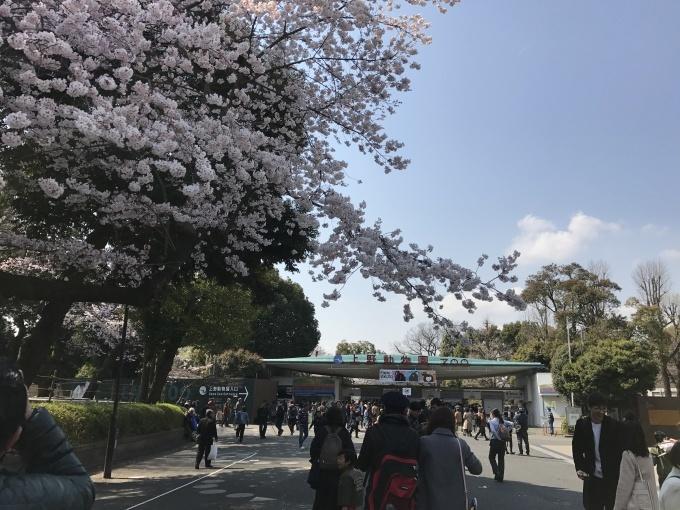 桜満開ですね❁_f0140343_15261038.jpg