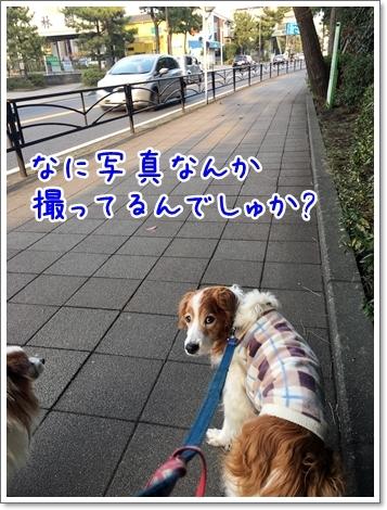 d0013149_01131487.jpg