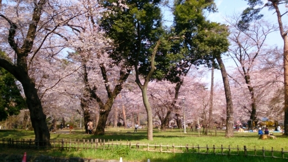 いよいよ、桜花舞台。_d0116059_16255730.jpg