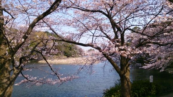 いよいよ、桜花舞台。_d0116059_16282825.jpg