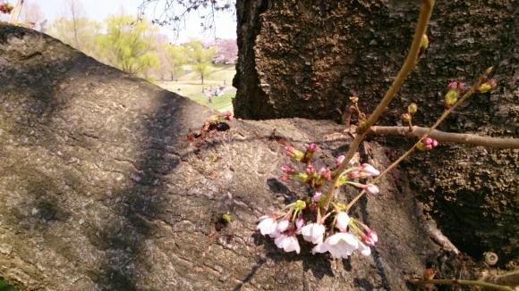 いよいよ、桜花舞台。_d0116059_16283549.jpg