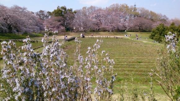 いよいよ、桜花舞台。_d0116059_16284071.jpg