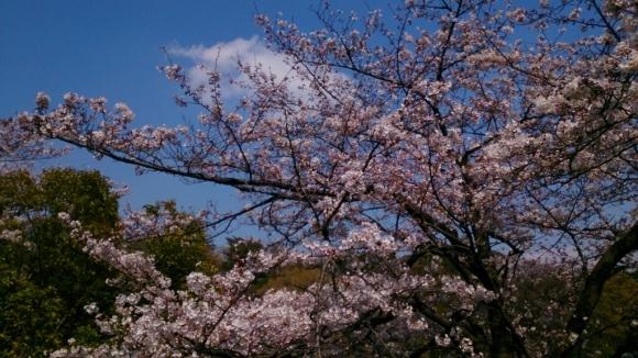 いよいよ、桜花舞台。_d0116059_16335679.jpg