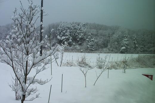 4月の始まりは雪景色。_c0110869_6501720.jpg