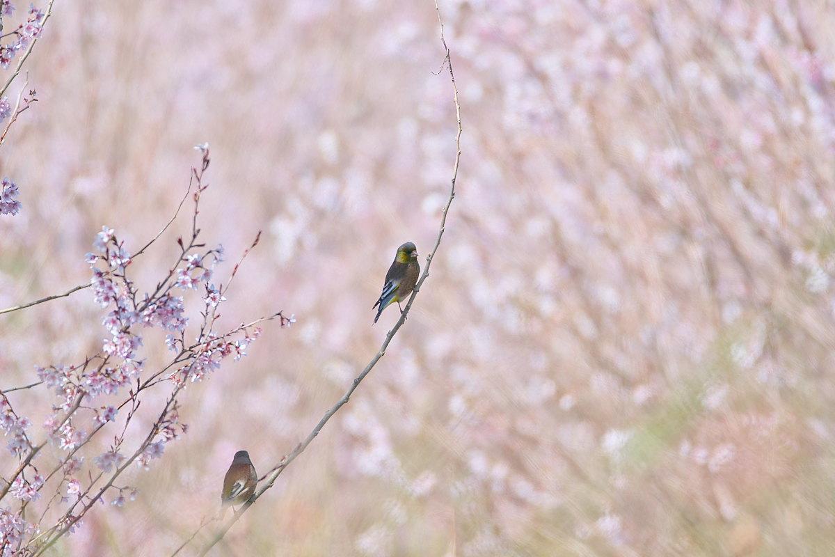 花の郷の小鳥達_d0125872_23175449.jpg