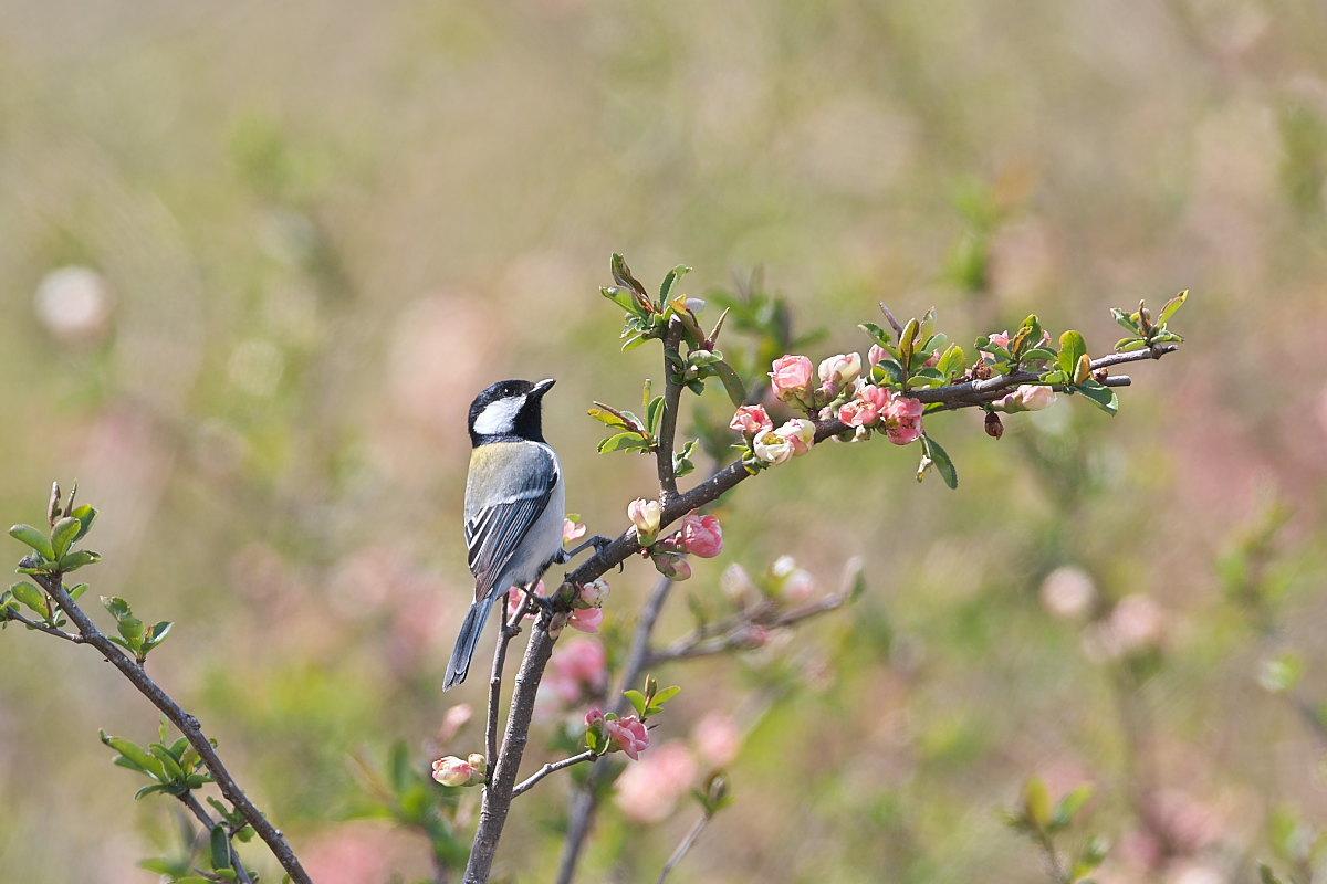 花の郷の小鳥達_d0125872_23234904.jpg