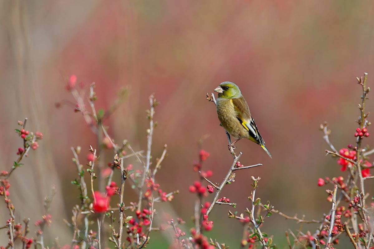 花の郷の小鳥達_d0125872_23245861.jpg