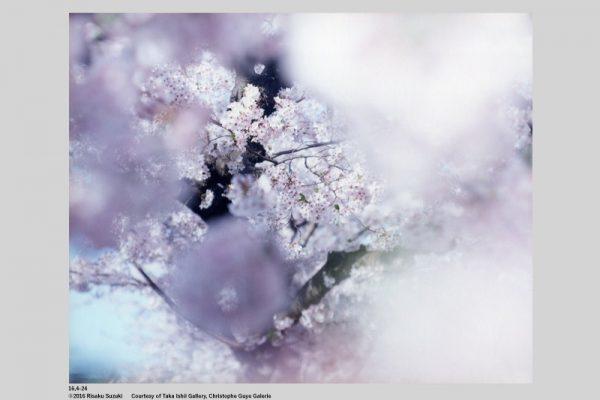 SAKURA | Risaku Suzuki | edition.nord展@la kagu_c0016177_00041518.jpg