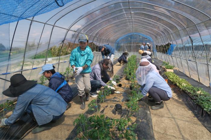 春の植え付けデー at Bliss  Farm Minou_c0116778_09142941.jpg