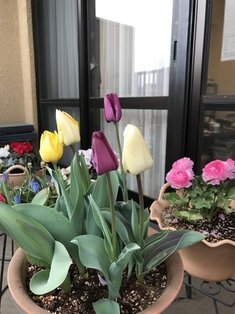春の足音はすぐそこに・・・_a0180279_10093294.jpg