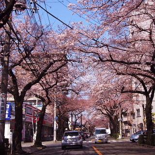 桜_c0039501_18243111.jpg