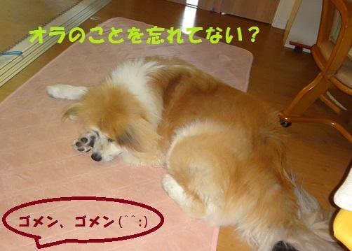 f0121712_06533702.jpg