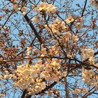 春からツヤツヤ致しましょう  NO.533_c0102513_22383924.jpg