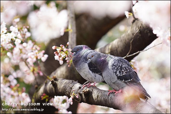 花見を楽しむワタシタチ_f0100215_23092295.jpg