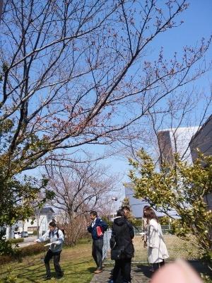 桜の開花宣言まもなく_e0037439_13352947.jpg