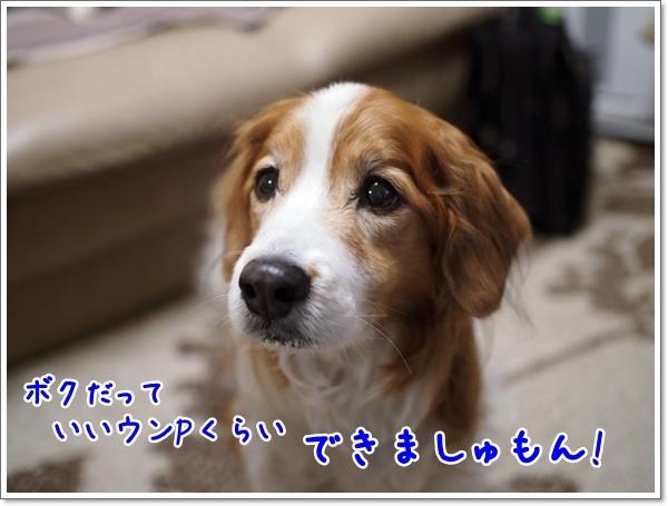 d0013149_23332045.jpg