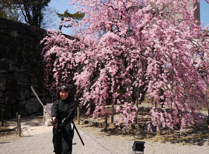 枝垂れ桜_b0093754_21475935.jpg