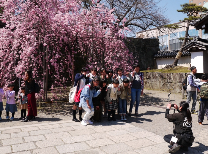 枝垂れ桜_b0093754_2150167.jpg