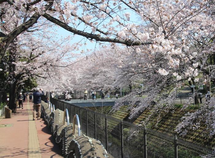 4月4日 今日の桜_c0122967_14591209.jpg