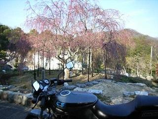 桜の開花はまだまだです_a0064474_17283081.jpg