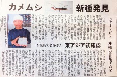 「キーヌガマ」新種のサシガメを見つけました_a0247891_10580153.jpg