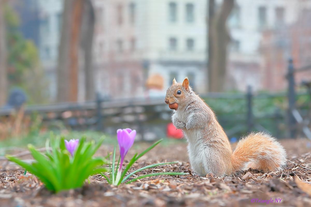 春のピクニック_a0274805_06161872.jpg