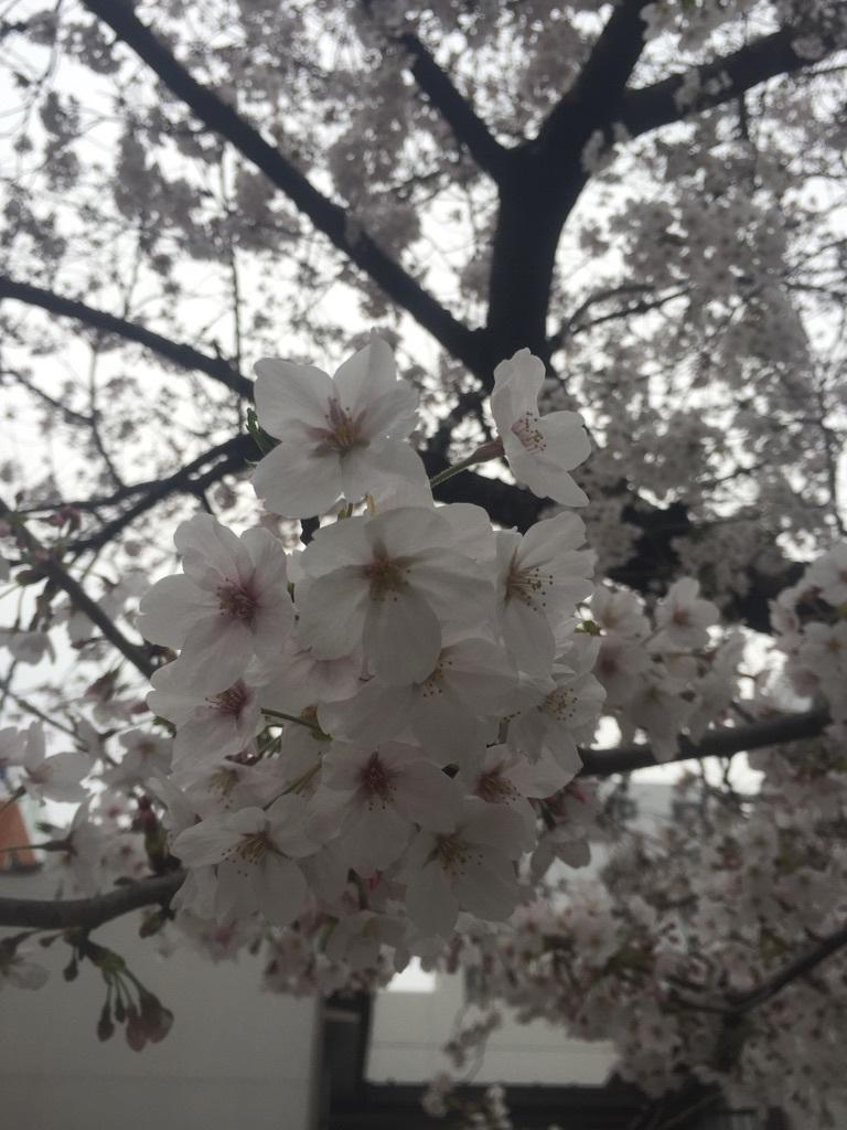 2017  春_c0184210_16264030.jpg