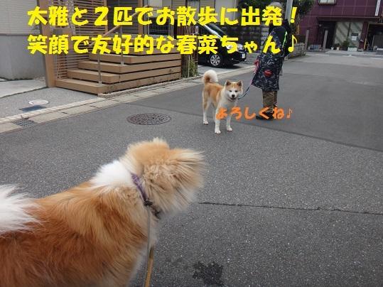 f0121712_14075092.jpg