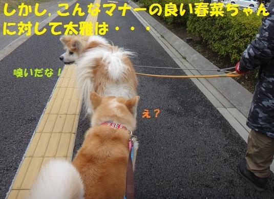 f0121712_14080939.jpg