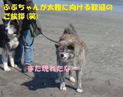 f0121712_14324804.jpg