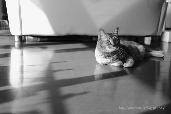 猫がいる暮らし - 6 -_e0347431_19454550.jpg