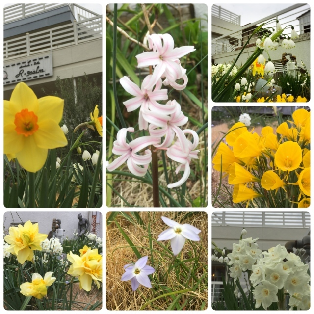 春 *_c0131839_17550088.jpg