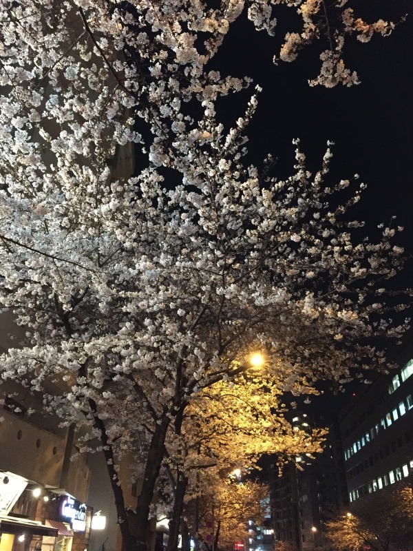 明治通りの夜桜_a0103940_08151118.jpg