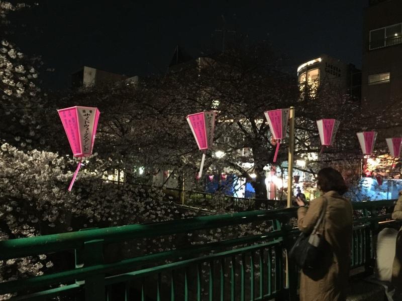 明治通りの夜桜_a0103940_08204430.jpg