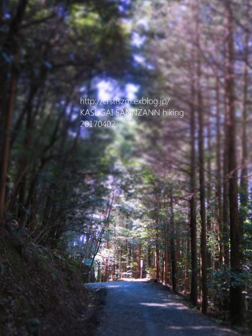 ひとり山歩き。 カタクリに片思い中。_e0348754_07035306.jpg
