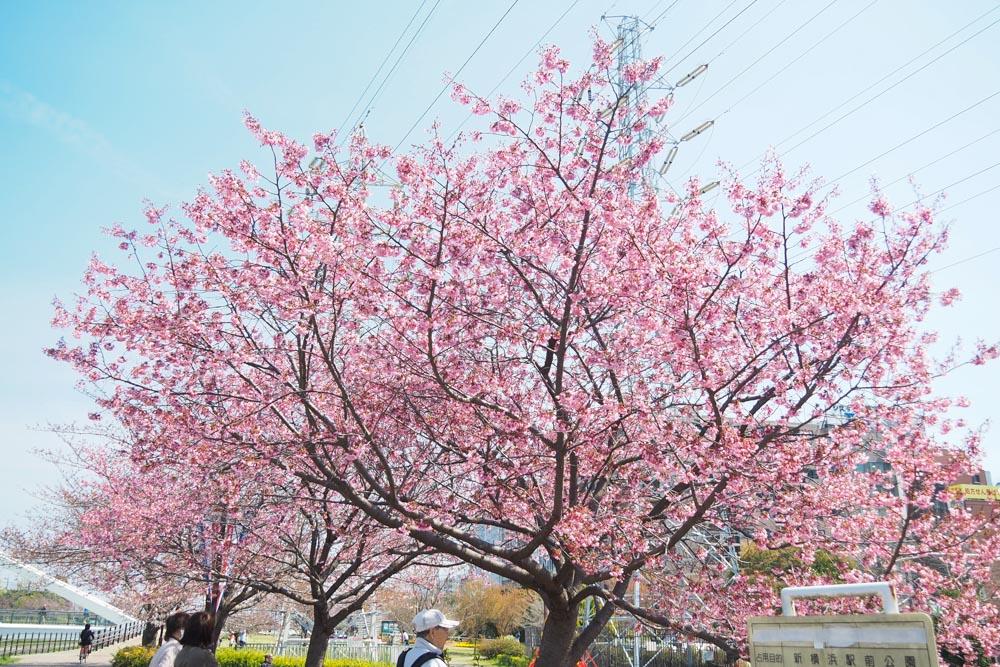 新横浜公園散歩_f0138158_12505879.jpg